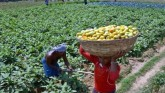 Good News On Economic Front: Agricultural Exports