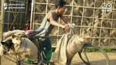 Nagaland Bans Dog Meat Consumption And Sale In Sta