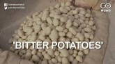 'Bitter Potatoes': Soaring Prices Make Easy To Get